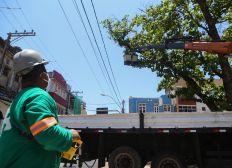 Podas de árvore melhoram paisagismo e evitam acidentes em Salvador