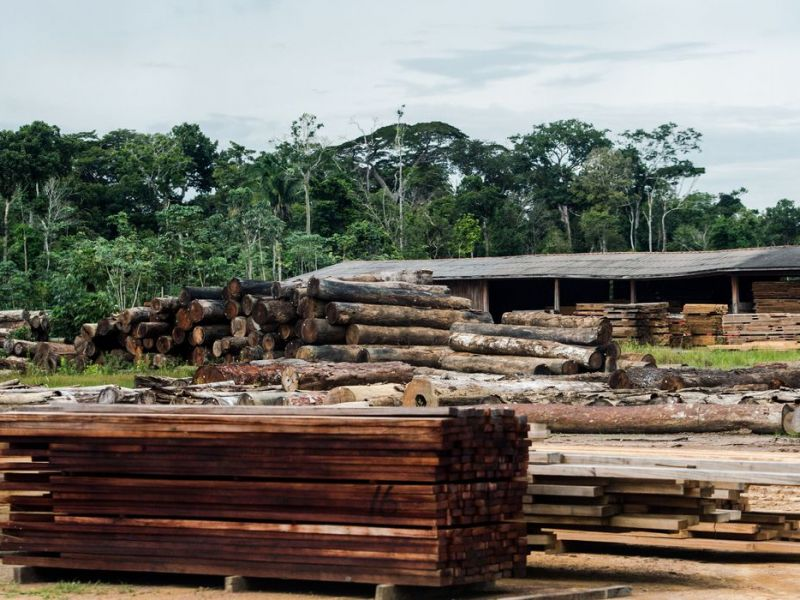 Classificação de madeira pode beneficiar consumidor, diz ministério da Agricultura