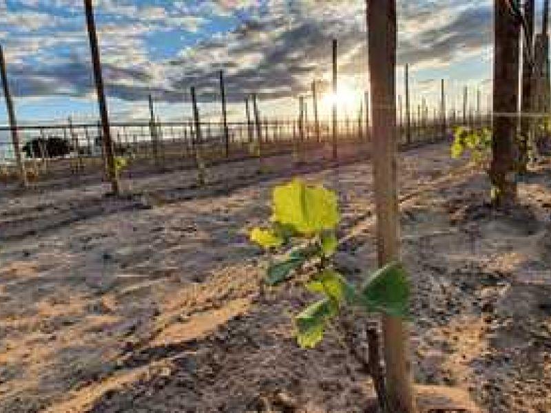 Sebrae e CIMATEC destaca potencial da Fazenda Escola Modelo de Barra para o desenvolvimento regional
