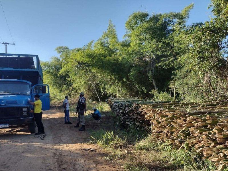 Ação da Prefeitura de Cachoeira e da PM flagra retirada ilegal de bambu no município