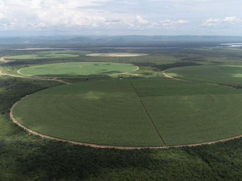 Governo da Bahia comemora crescimento do PIB do Agro
