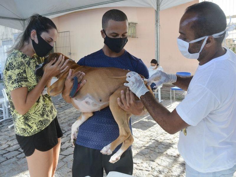 Salvador vacina mais de 80% dos animais em campanha antirrábica