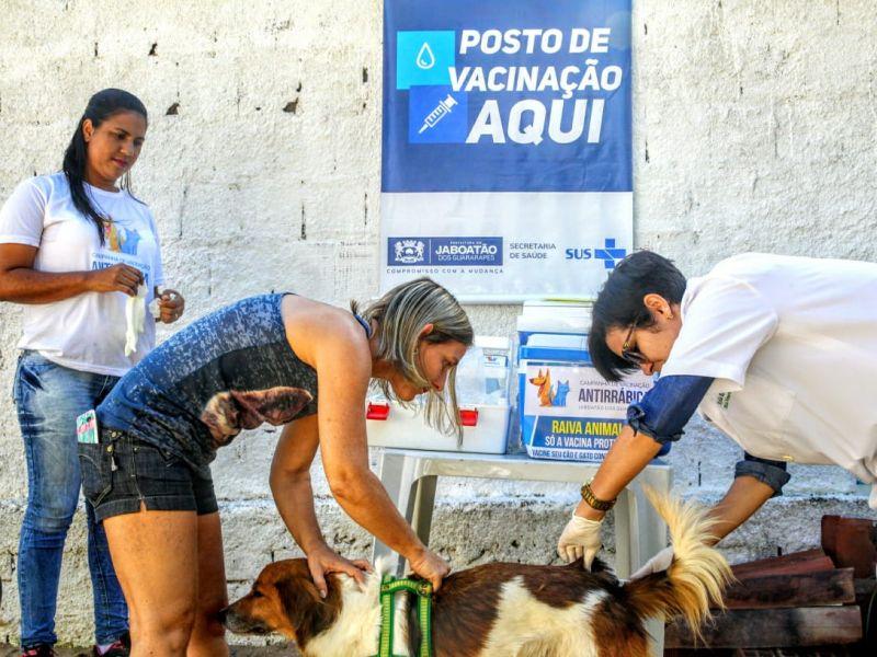Confira postos fixos da Campanha de vacinação antirrábica em Salvador