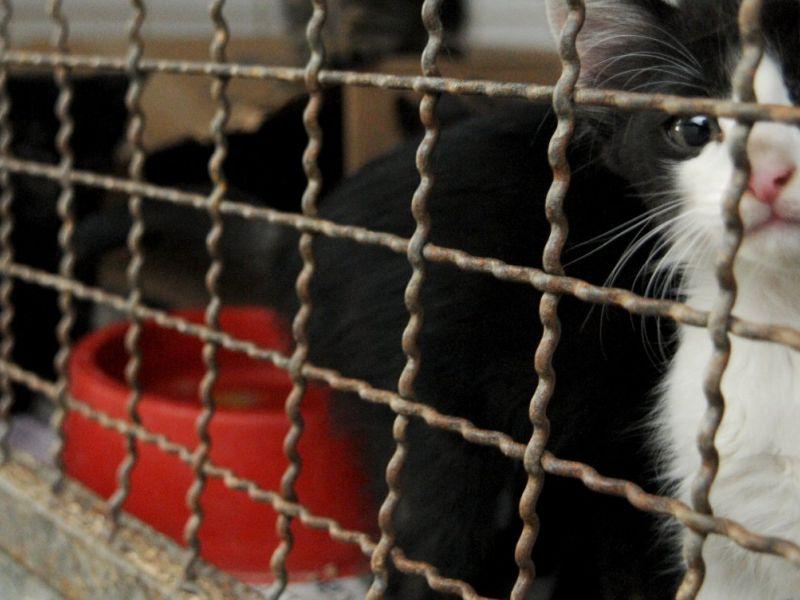 Feira de Adoção Pet é realizada neste sábado (25) no Shopping da Bahia