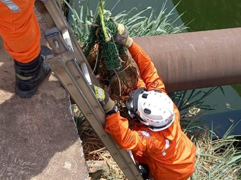 Bombeiros resgatam cachorro de canal de esgoto em Barreiras